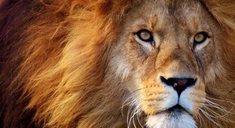 sol en leo astrología leones